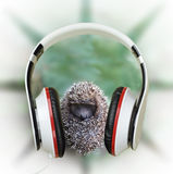Small hedgehog in headphones listening to music. Concept. Relaxa Stock Photography
