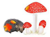 Small hedgehog near with mushrooms. Stock Photography