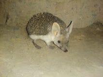 Small hedgehog Stock Photos