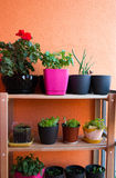 Small herb and flower garden built on small balcony garden Stock Image