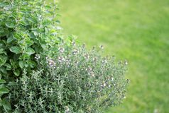 Small herb garden Royalty Free Stock Image