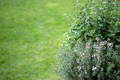Small herb garden Stock Images