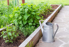 Small herb garden and metal watering can. Garden bed with spearmint and greenery. Royalty Free Stock Photography