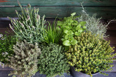 Small herb garden on wood Stock Photography