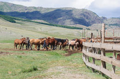 A small herd of horses in corral Stock Images