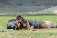 A small herd of horses in corral. In Altai rural region Royalty Free Stock Photos