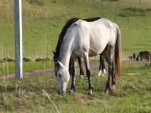 Small herd of horses feeding stock video