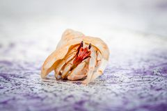Small Hermit Crab Royalty Free Stock Photo