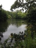 Small hidden pond. Photo of a small hidden pond with a duck in the middle Stock Images