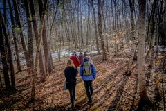 Small hikers group walking in a forest at Winter royalty free stock photo