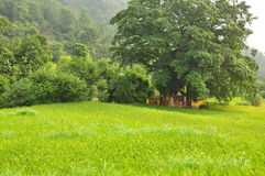 Small Hindu temple under a tree in a green rice paddy Stock Image