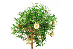 Small holiday myrtle tree Stock Photos