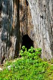 Small hollow tree surrounded with green grass Stock Photography