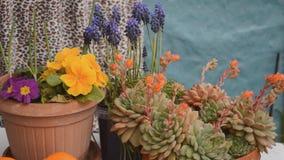 Small Home Balcony Garden stock footage