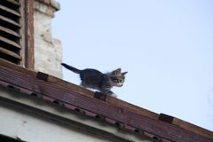 Small home striped kitten walking on the roof. Small home striped kitten walking on the old wooden stairs on the roof royalty free stock images