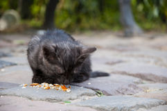 Small homeless cat eating Stock Image