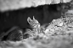 Small homeless kitten Royalty Free Stock Photo