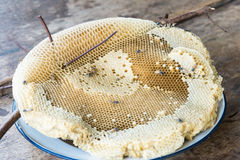 Small honeycomb with branch Royalty Free Stock Image