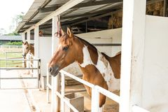 A small horse staple with two small horses Royalty Free Stock Photos