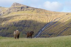 Ponies grazing with scenic view to mountains, Faroe Islands, Denmark Stock Photo