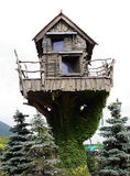 Small house. Fantastic small house  on a tree trunk, twined an ivy Royalty Free Stock Images