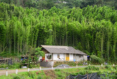A small house at bamboo forest in Sapa, Vietnam Stock Photography