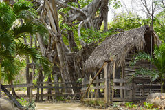 Small house in banyan trees forest Stock Photography