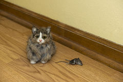 Small House Cat with Dead Mouse Rodent in House. Eek! A mouse! The dead rodent is inside a house or home and is just downright disgusting! Did the cat find a royalty free stock images