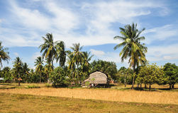 A small house with coconut trees in Kampot, Cambodia Stock Photography