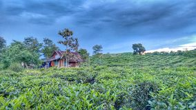 Small house in a coffee and tea plantation stock image
