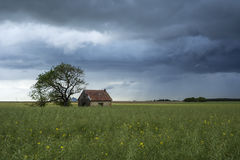 Small house in the field. Small house with tree in colza field with approaching storm Royalty Free Stock Photos