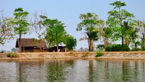 Small house on fish pond side and in rice field Royalty Free Stock Image