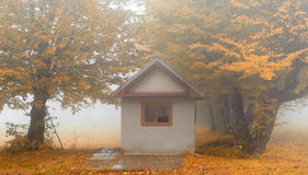 Small house in foggy forest Stock Photography