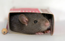 Small house of a mouse Royalty Free Stock Image
