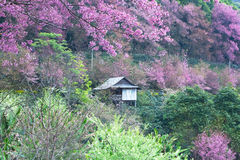 Small house in pink forest Stock Image