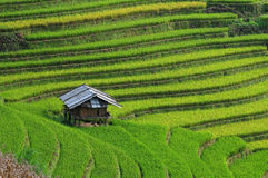 A small house on rice field in Mu Cang Chai, Vietnam Royalty Free Stock Photo