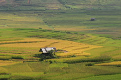 Small house on the rice field in Yanbai, Vietnam Royalty Free Stock Photography