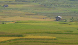 Small house on the rice fields in Hagiang, Vietnam Royalty Free Stock Photo