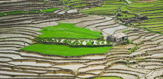 Small house with rice fields Royalty Free Stock Photography