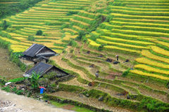 Small house with Rice terraces Stock Image
