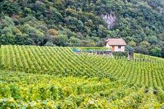 Small House Vineyard Stock Photo