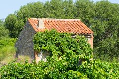 Small house at a vineyard at South of France. Old vineyard at Maury, South of France Stock Photography