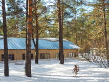 Small house in winter forest in sunny day. Winter landscape Royalty Free Stock Image