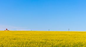 Small house in yellow flowers field with clear blue sky and transmission lines. Spring and summer rural landscape.Vastness concept. Small red house in yellow Stock Photo