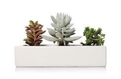 Small houseplants Royalty Free Stock Photo