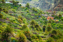 Small houses and palm trees in the famous Masca valley Stock Images