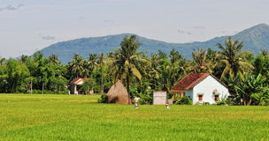 Small houses with rice fields in Longan, Vietnam stock image