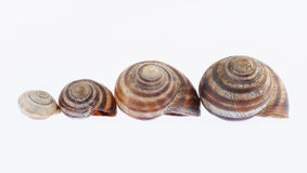 Small houses of snail Stock Photography