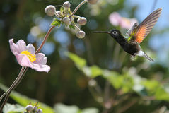 Small hummingbird near flowers frozen in action Royalty Free Stock Photos