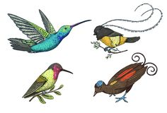 Small hummingbird. Rufous and White-necked Jacobin, bird of paradise. Exotic tropical animal icons. Golden tailed. Sapphire. Use for wedding, party. engraved Royalty Free Stock Images
